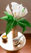 DIY皱纹纸马蹄莲纸花 马蹄莲的花语是什么