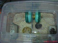 自制仓鼠笼子 DIY实用仓鼠笼详细教程